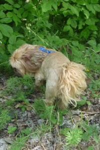 Hamish detected movement in the grass. Was it a bandito?